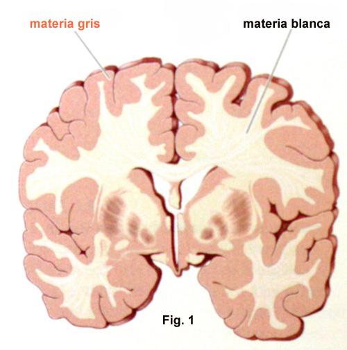 materia_grise_blanca